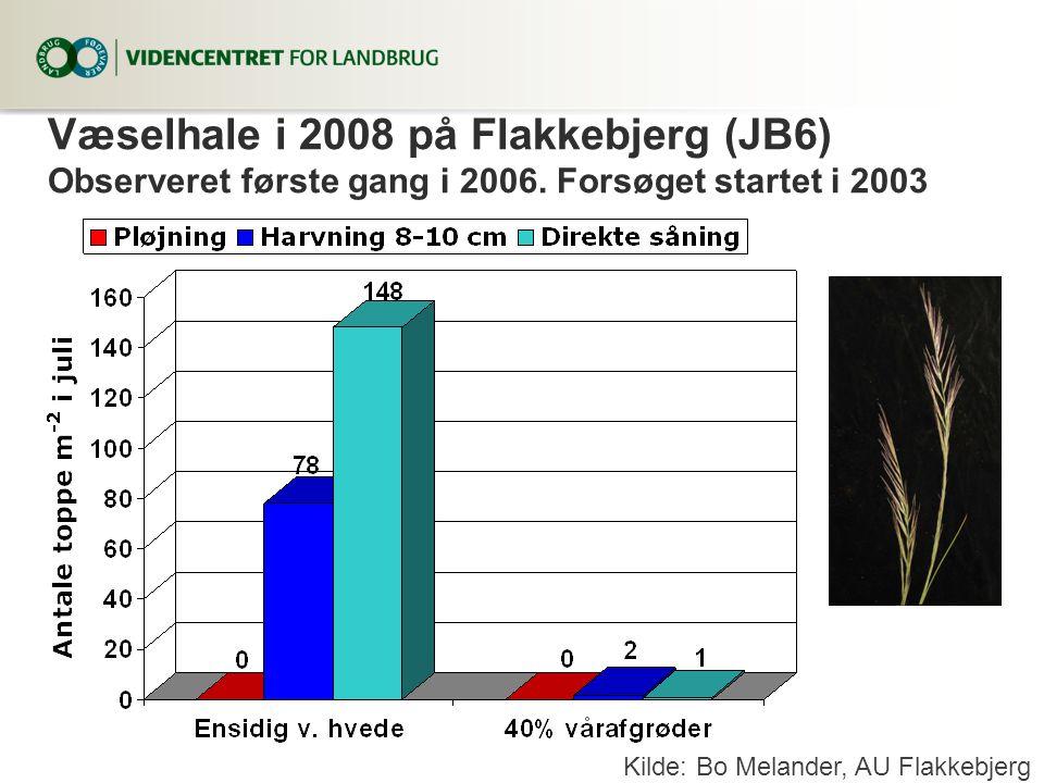 Væselhale i 2008 på Flakkebjerg (JB6) Observeret første gang i 2006