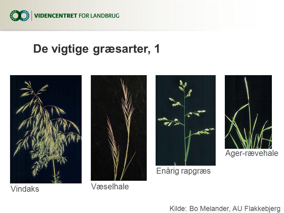 De vigtige græsarter, 1 Ager-rævehale Enårig rapgræs Væselhale Vindaks