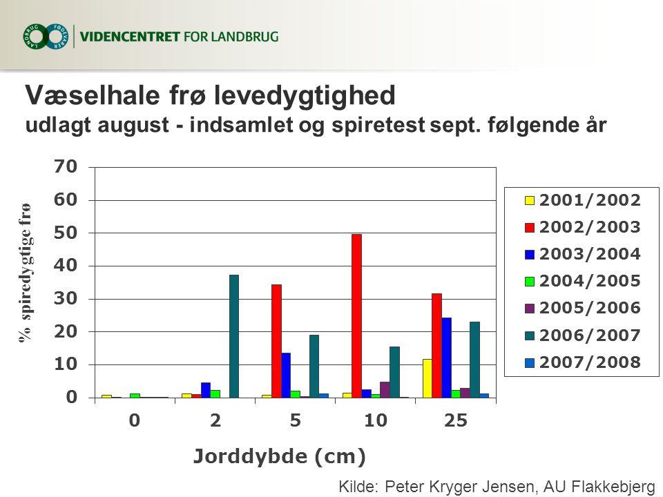 Væselhale frø levedygtighed udlagt august - indsamlet og spiretest sept. følgende år