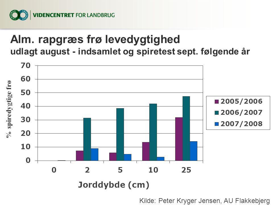 Alm. rapgræs frø levedygtighed udlagt august - indsamlet og spiretest sept. følgende år