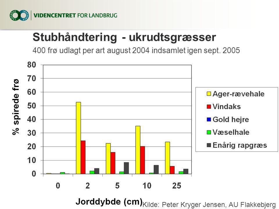 Stubhåndtering - ukrudtsgræsser