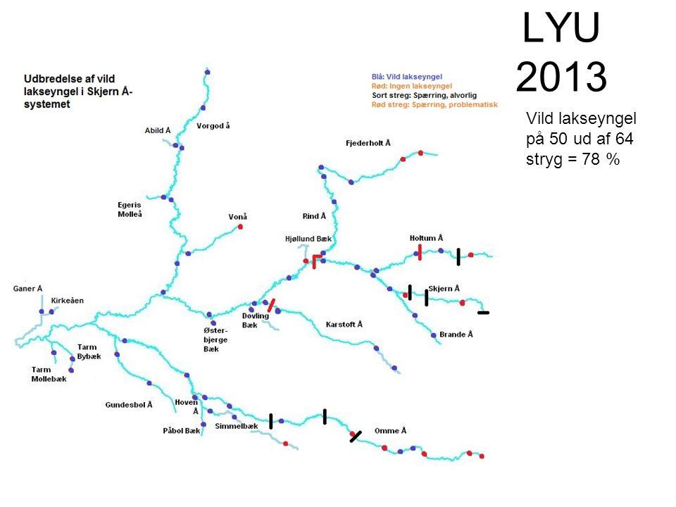LYU 2013 Vild lakseyngel på 50 ud af 64 stryg = 78 %