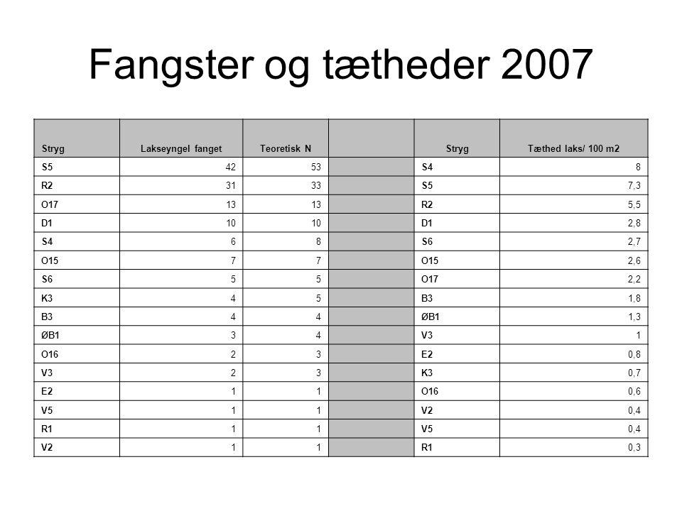 Fangster og tætheder 2007 Stryg Lakseyngel fanget Teoretisk N