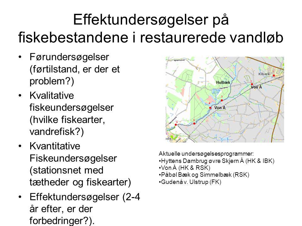 Effektundersøgelser på fiskebestandene i restaurerede vandløb
