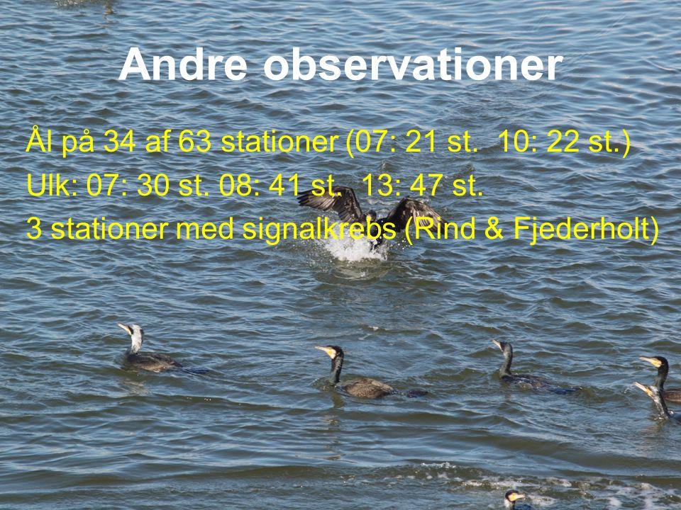 Andre observationer Ål på 34 af 63 stationer (07: 21 st. 10: 22 st.)