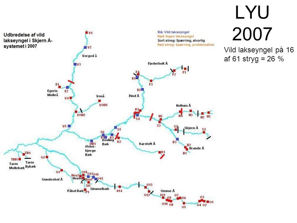 LYU 2007 Vild lakseyngel på 16 af 61 stryg = 26 %