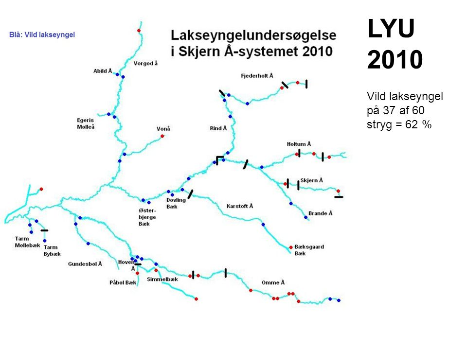 LYU 2010 Vild lakseyngel på 37 af 60 stryg = 62 %