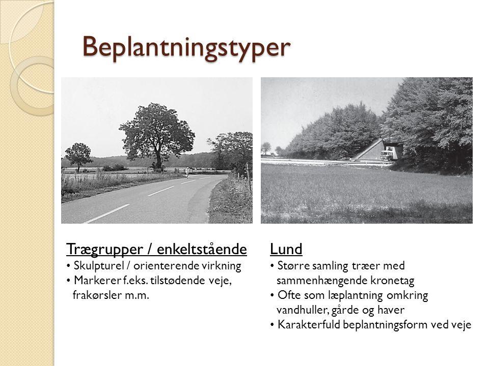 Beplantningstyper Trægrupper / enkeltstående Lund
