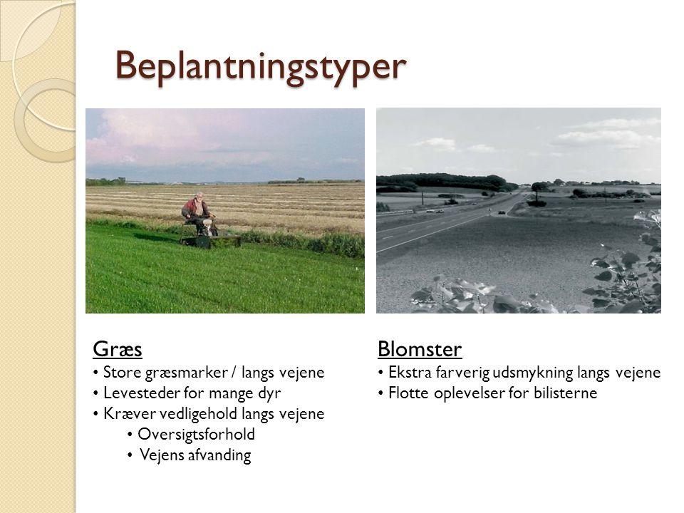 Beplantningstyper Græs Blomster Store græsmarker / langs vejene