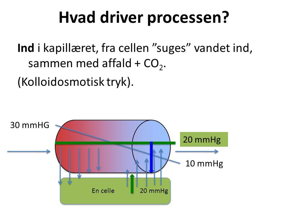 Hvad driver processen Ind i kapillæret, fra cellen suges vandet ind, sammen med affald + CO2. (Kolloidosmotisk tryk).