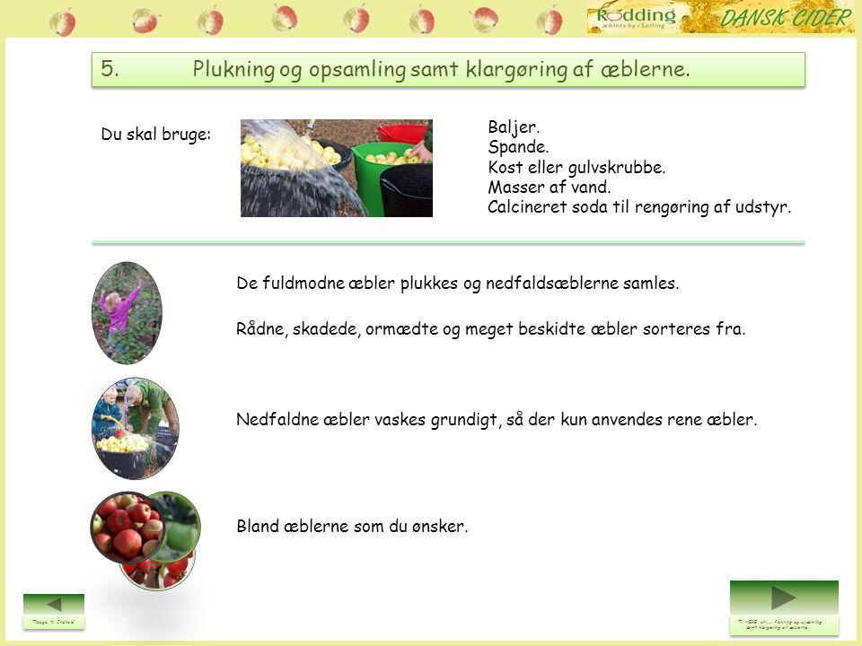 5. Plukning og opsamling samt klargøring af æblerne.
