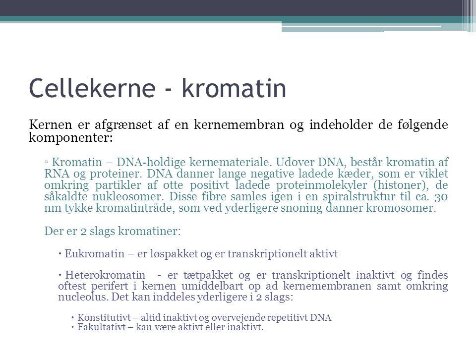 Cellekerne - kromatin Kernen er afgrænset af en kernemembran og indeholder de følgende komponenter: