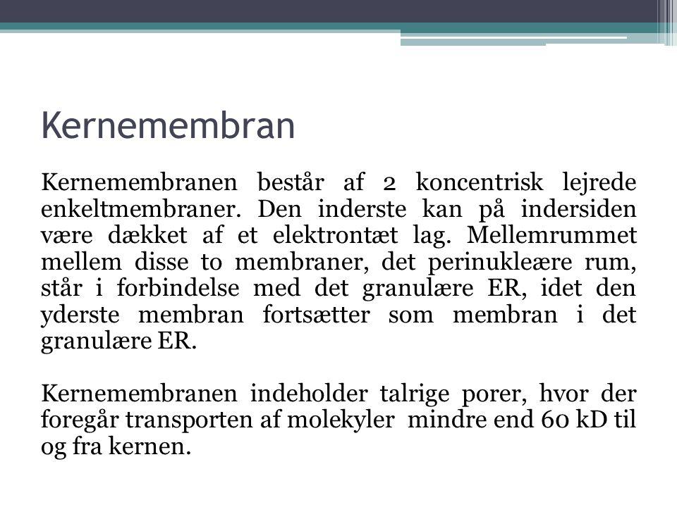 Kernemembran
