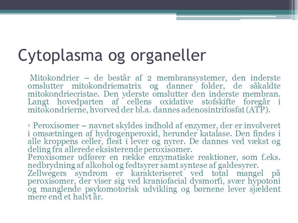 Cytoplasma og organeller