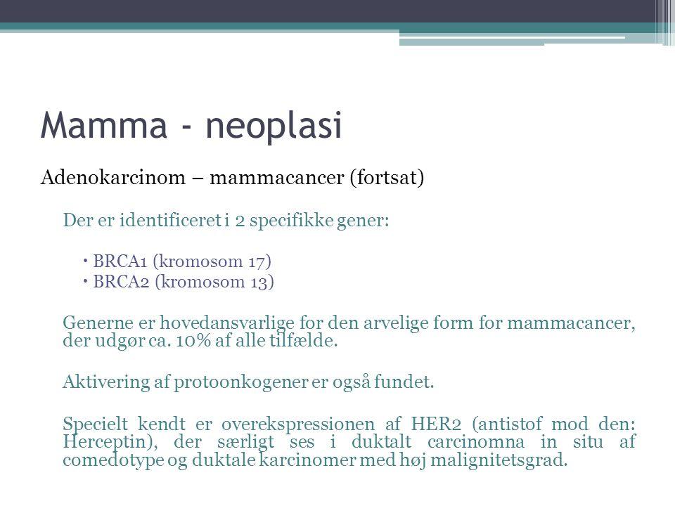 Mamma - neoplasi Adenokarcinom – mammacancer (fortsat)
