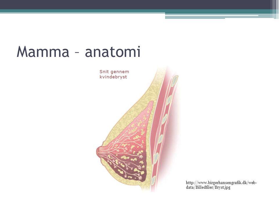 Mamma – anatomi http://www.birgerhansengrafik.dk/web-data/Billedfiler/Bryst.jpg