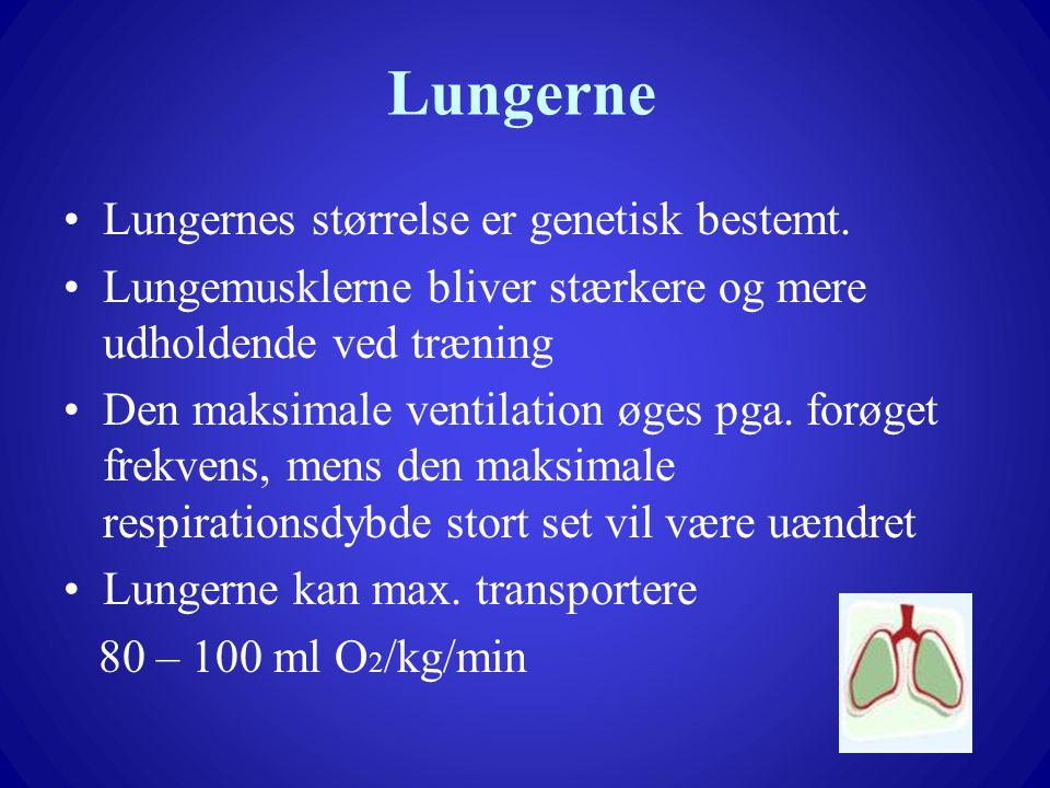 Lungerne Lungernes størrelse er genetisk bestemt.