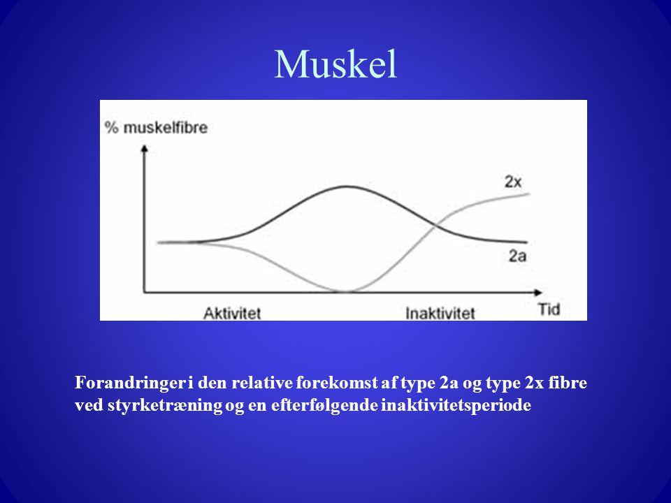 Muskel Forandringer i den relative forekomst af type 2a og type 2x fibre ved styrketræning og en efterfølgende inaktivitetsperiode.