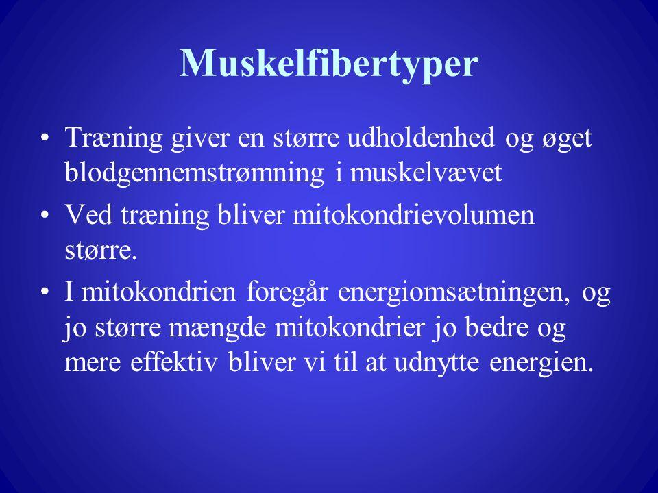 Muskelfibertyper Træning giver en større udholdenhed og øget blodgennemstrømning i muskelvævet. Ved træning bliver mitokondrievolumen større.