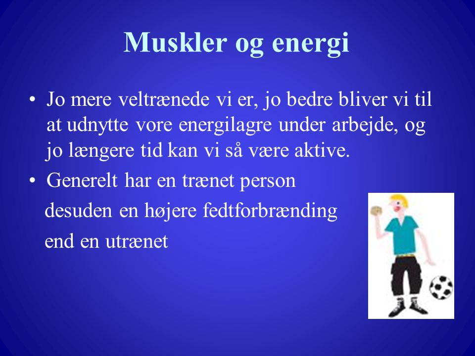 Muskler og energi