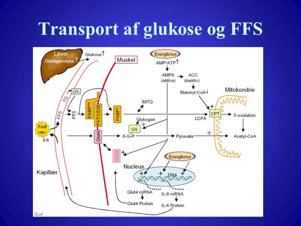 Transport af glukose og FFS