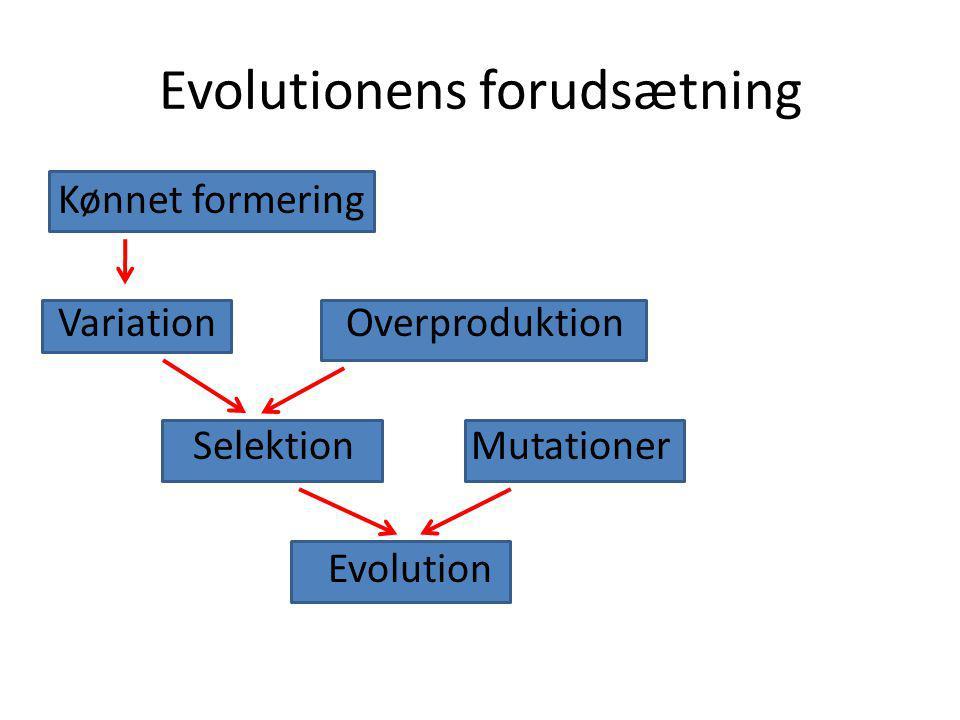 Evolutionens forudsætning