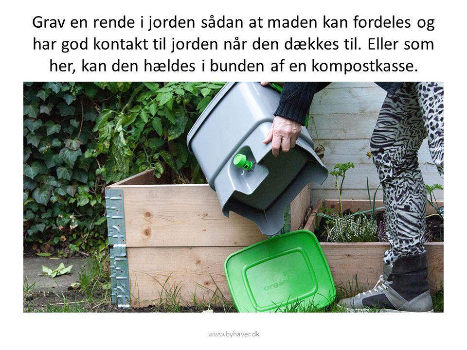 Grav en rende i jorden sådan at maden kan fordeles og har god kontakt til jorden når den dækkes til. Eller som her, kan den hældes i bunden af en kompostkasse.