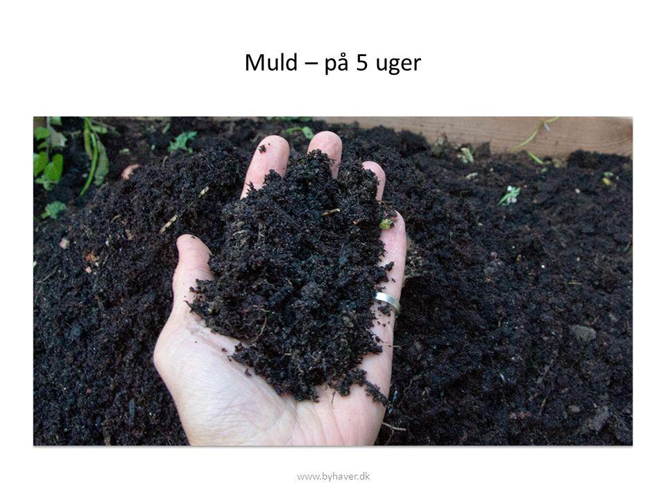 Muld – på 5 uger www.byhaver.dk
