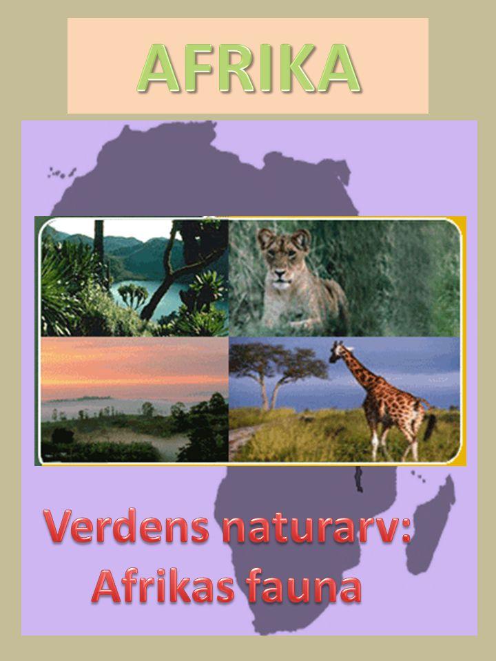 AFRIKA Verdens naturarv: Afrikas fauna