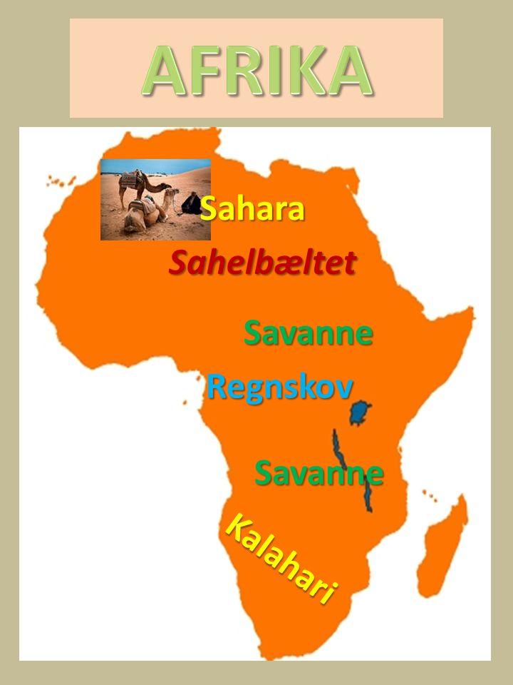 AFRIKA Sahara Sahelbæltet Savanne Regnskov Savanne Kalahari