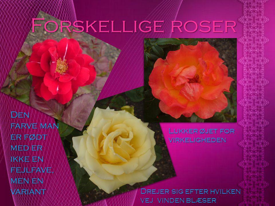 Forskellige roser Den farve man er født med er ikke en fejlfave, men en variant. Lukker øjet for virkeligheden.