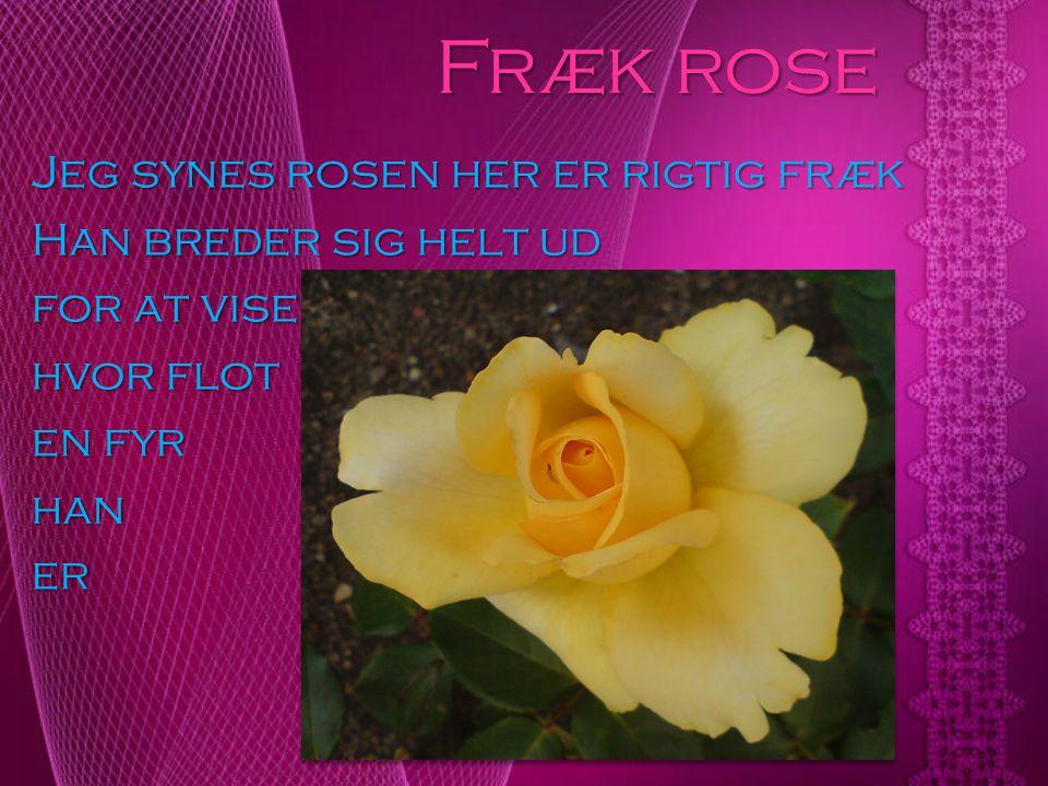 Fræk rose Jeg synes rosen her er rigtig fræk Han breder sig helt ud for at vise hvor flot en fyr han er