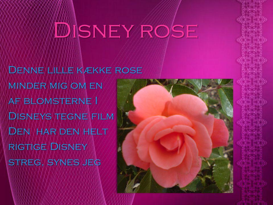 Disney rose Denne lille kække rose minder mig om en af blomsterne I