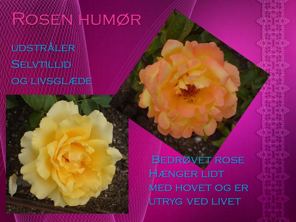 Rosen humør udstråler Selvtillid og livsglæde Bedrøvet rose