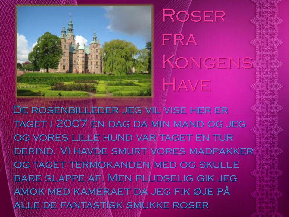 Roser fra Kongens Have