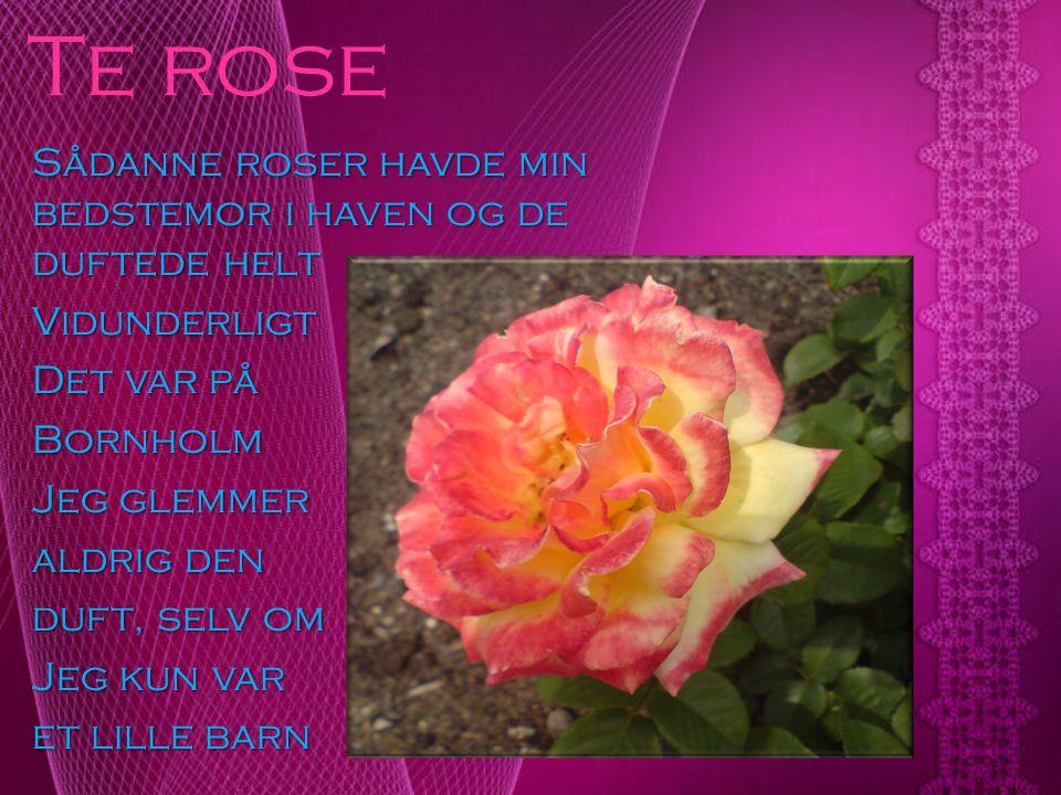 Te rose Sådanne roser havde min bedstemor i haven og de duftede helt