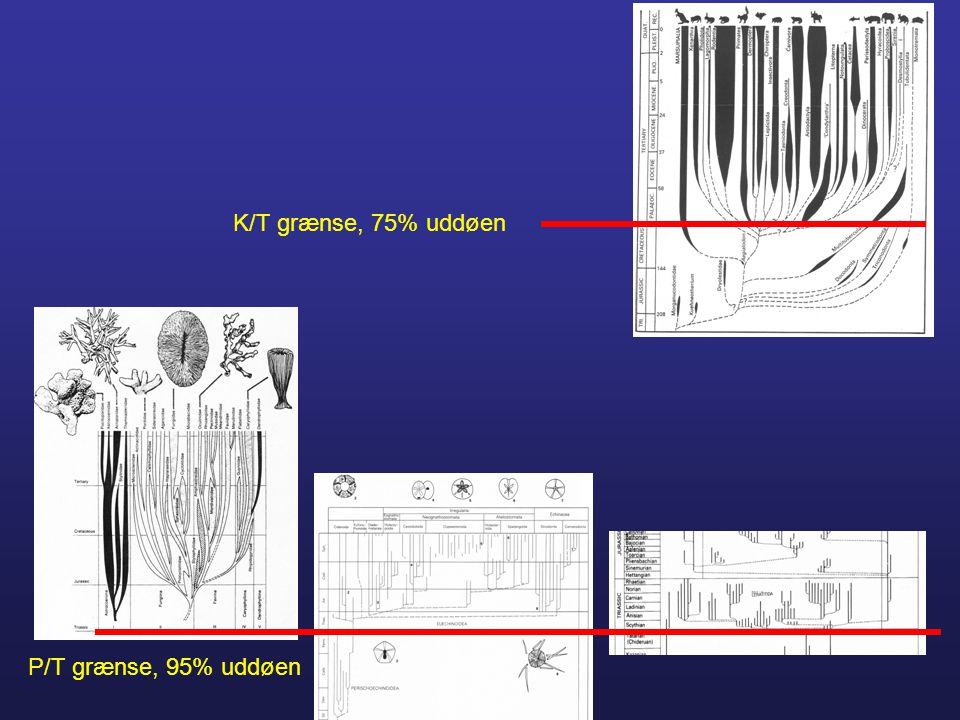 K/T grænse, 75% uddøen P/T grænse, 95% uddøen