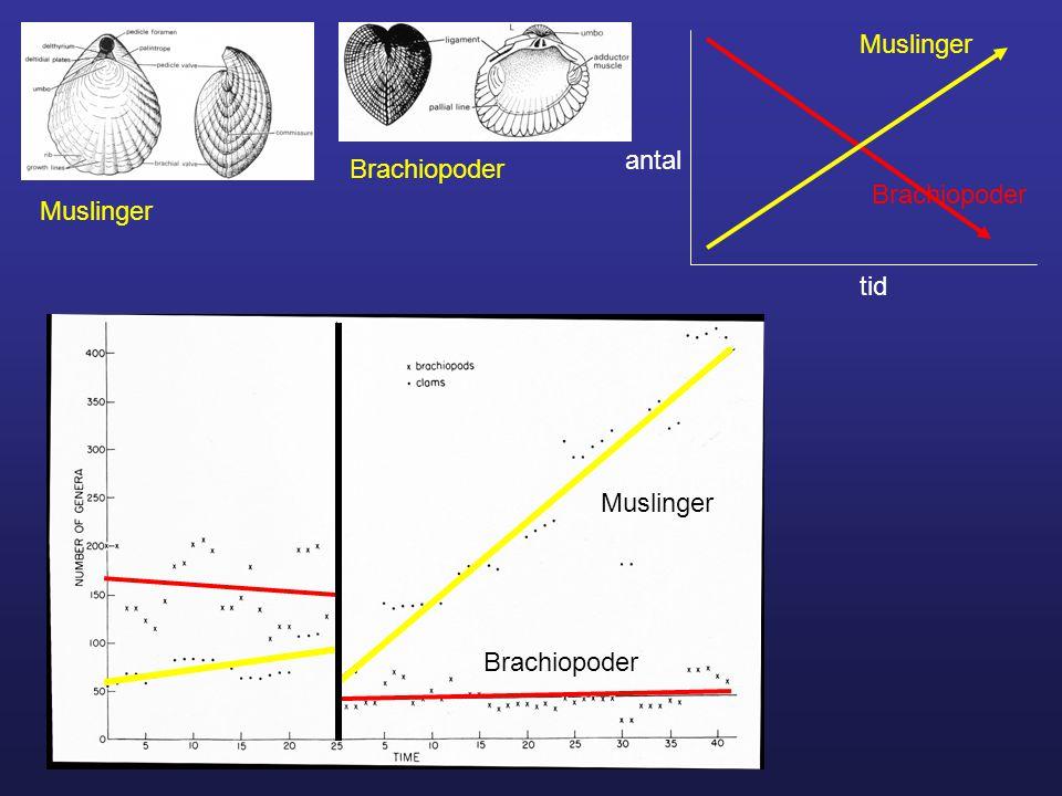 Muslinger antal Brachiopoder Brachiopoder Muslinger tid Muslinger Brachiopoder