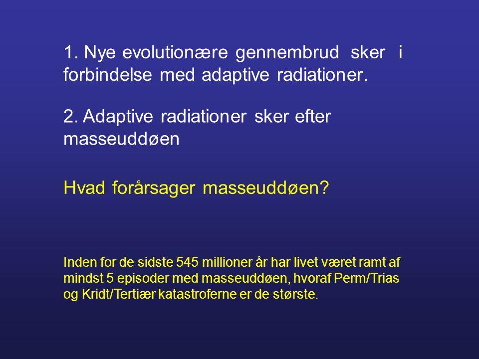 2. Adaptive radiationer sker efter masseuddøen