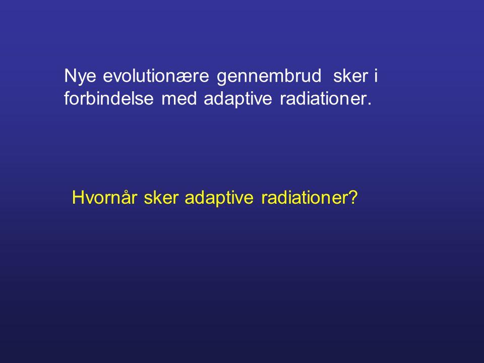 Nye evolutionære gennembrud sker i forbindelse med adaptive radiationer.