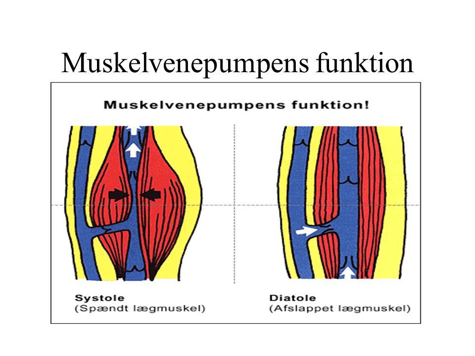 Muskelvenepumpens funktion