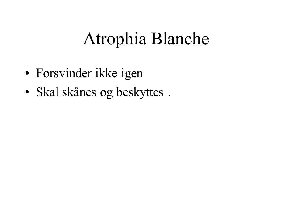 Atrophia Blanche Forsvinder ikke igen Skal skånes og beskyttes .