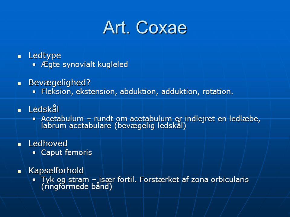 Art. Coxae Ledtype Bevægelighed Ledskål Ledhoved Kapselforhold