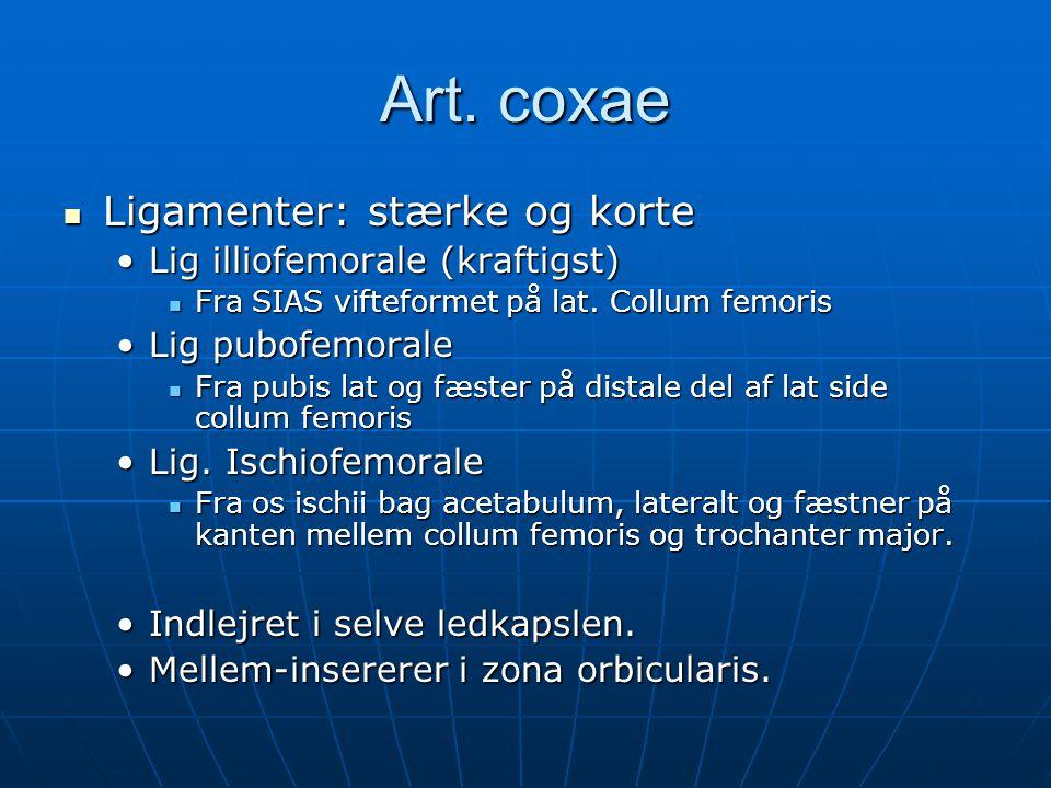 Art. coxae Ligamenter: stærke og korte Lig illiofemorale (kraftigst)