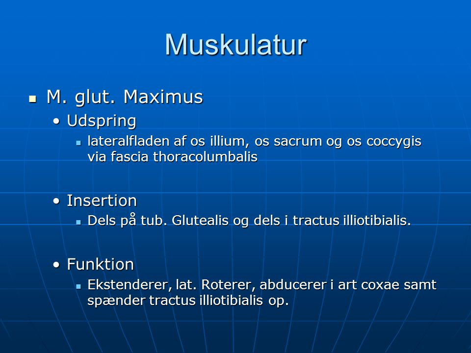 Muskulatur M. glut. Maximus Udspring Insertion Funktion