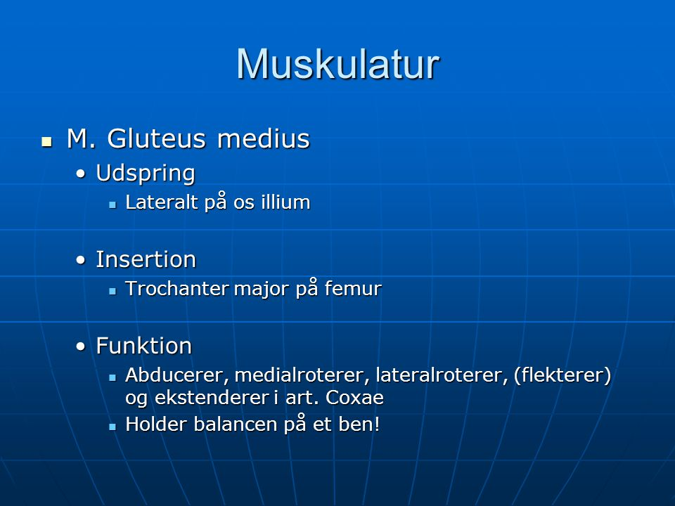 Muskulatur M. Gluteus medius Udspring Insertion Funktion