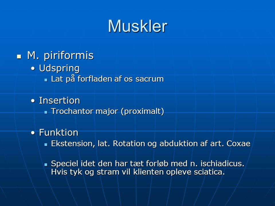 Muskler M. piriformis Udspring Insertion Funktion