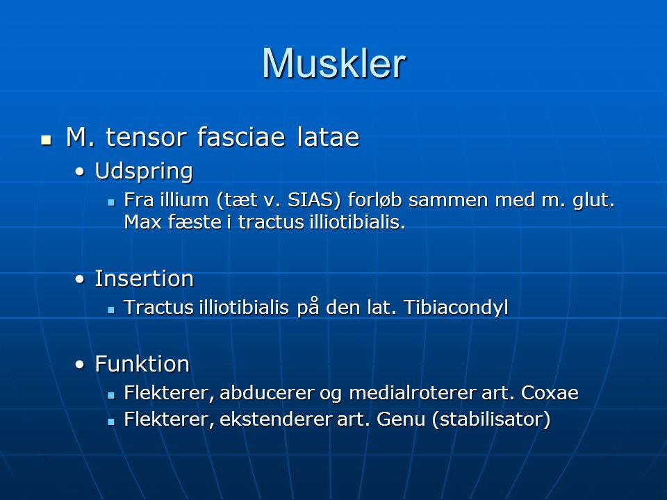 Muskler M. tensor fasciae latae Udspring Insertion Funktion