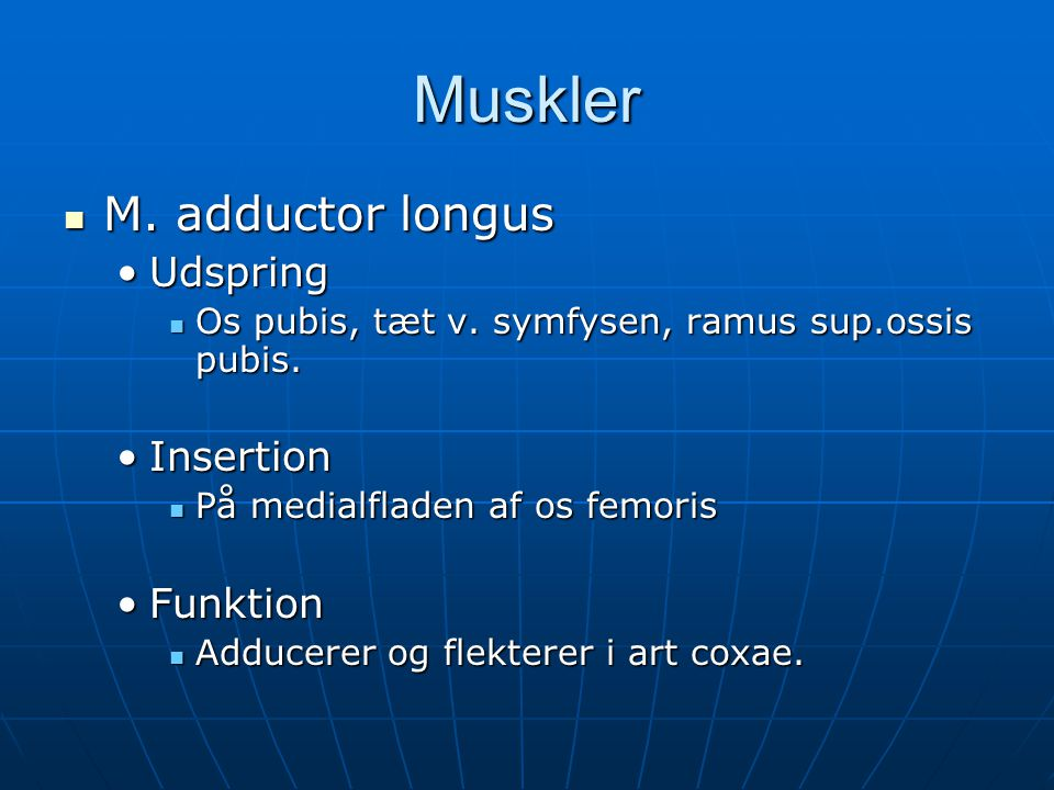 Muskler M. adductor longus Udspring Insertion Funktion