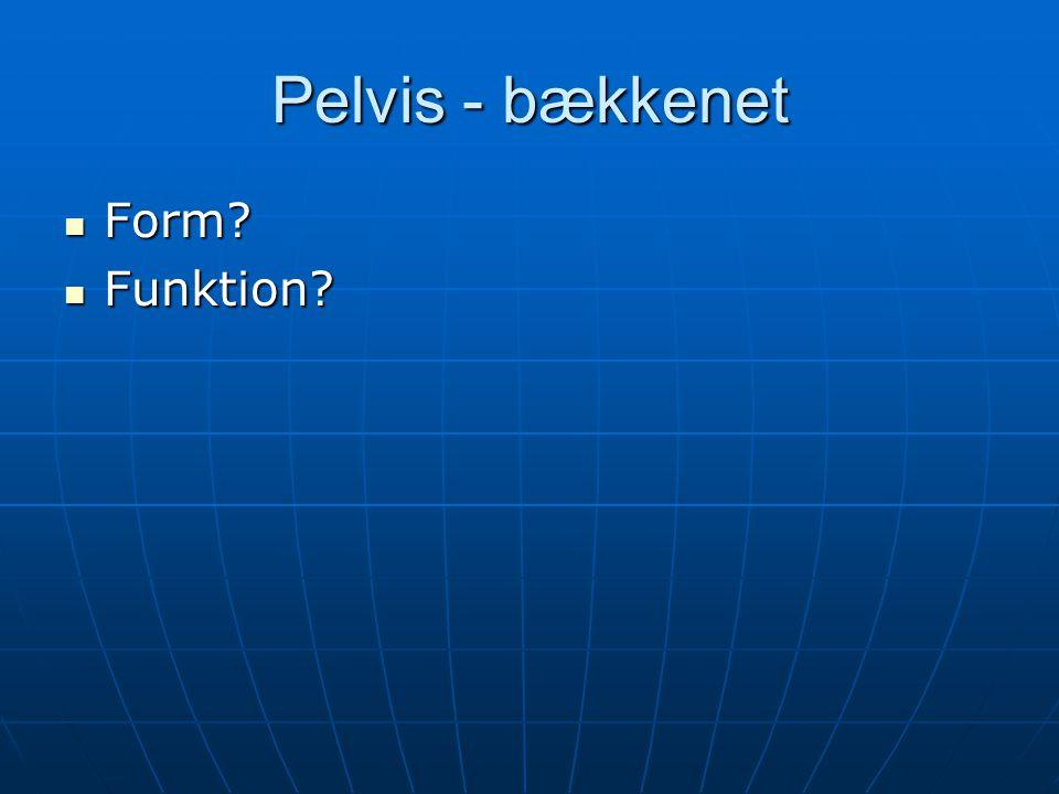 Pelvis - bækkenet Form Funktion